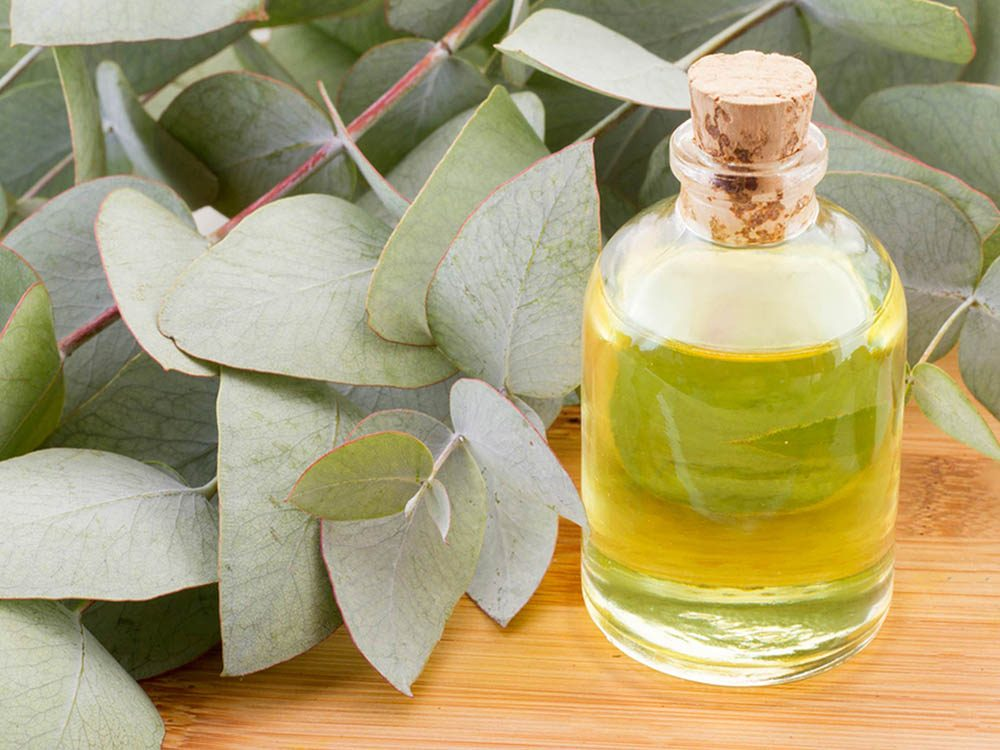Huiles essentielles : l'eucalyptus faciliter la respiration.