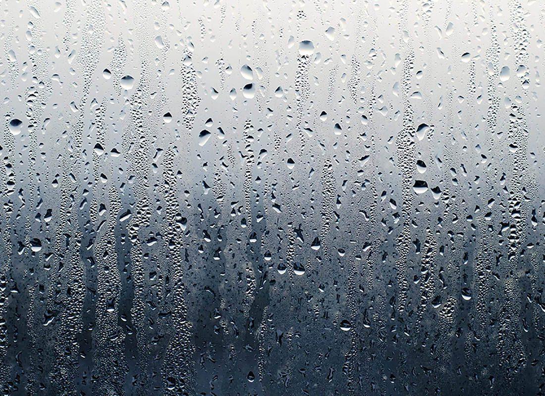 Montrez de la gratitude envers le parfum de la pluie.