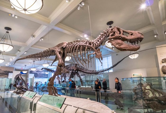 Musées du monde : visitez le Musée américain d'histoire naturelle.