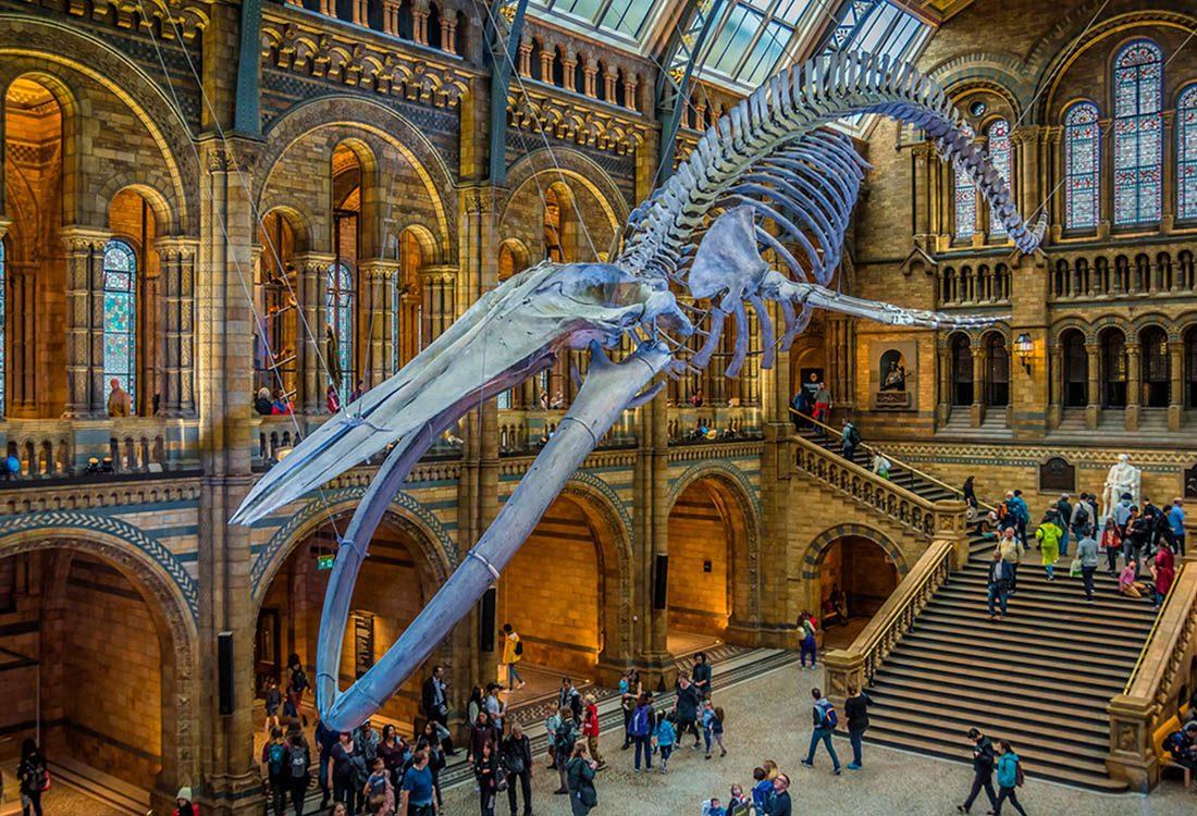 Musées du monde : le musée d'histoire naturelle de Londres est l'un des plus populaires.