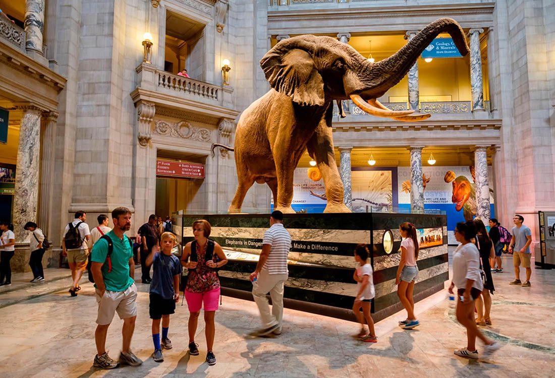 Musées du monde : le musée d'histoire naturelle de Washington est très populaire.