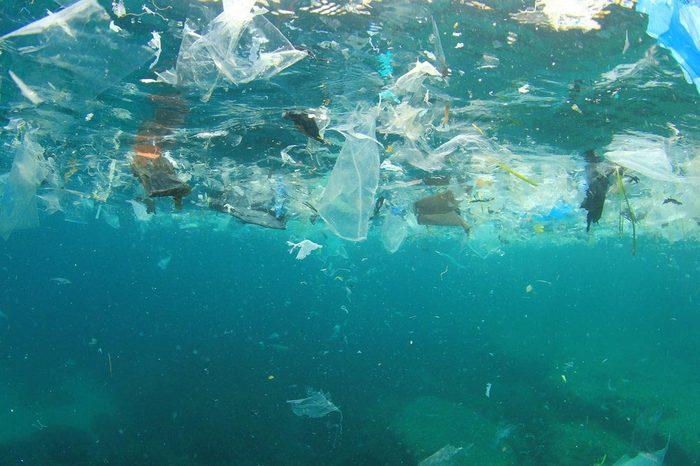 Le plastique endommage la vie marine.