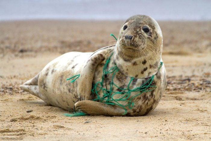 Les filets en plastiques sont un danger pour les animaux.