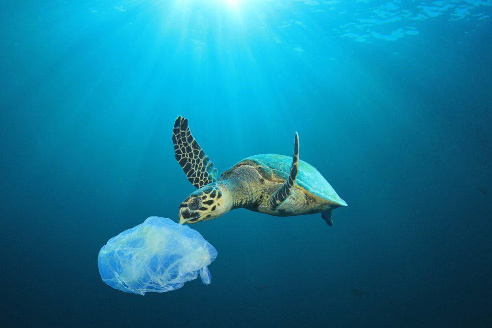 Le plastique tue des animaux marins.