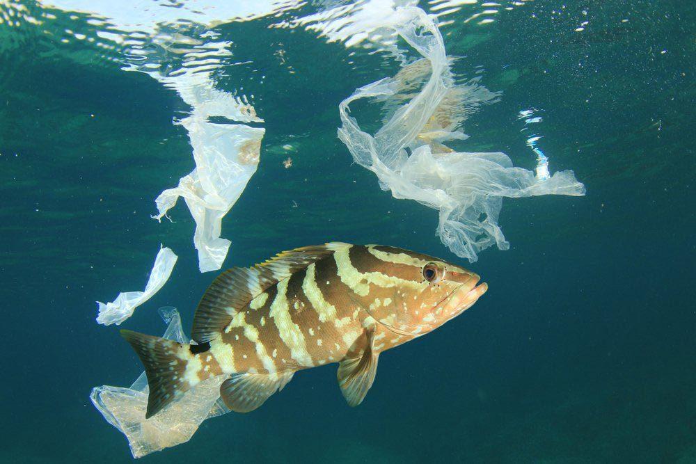Il y a plus de plastique que de poissons.