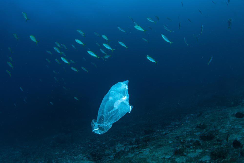 Le plastique à usage unique a atteint atteint les fonds océaniques.