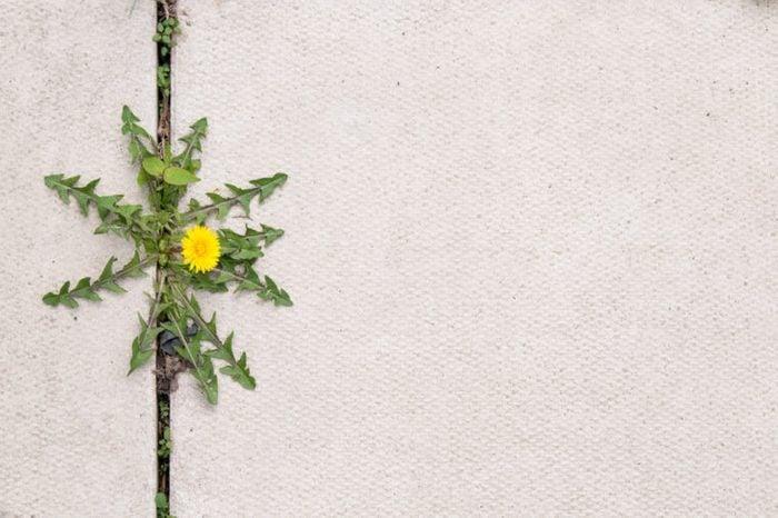 Produit fait maison pour la cour: herbicide