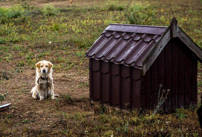 Durant un orage, gardez vos animaux de compagnie à l'intérieur.
