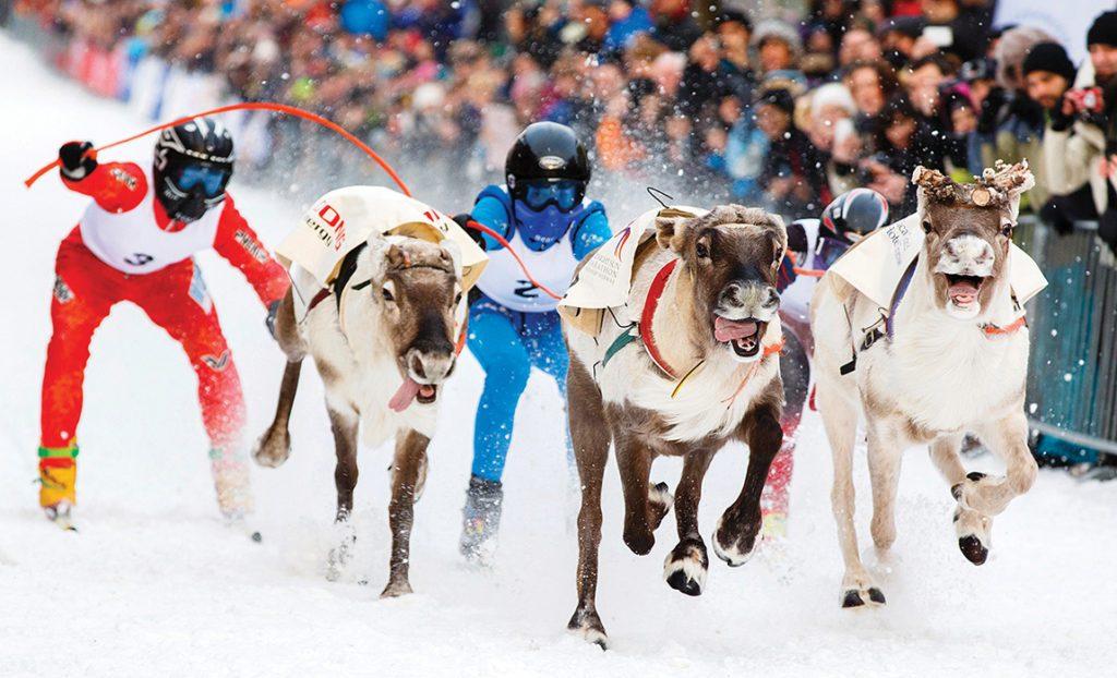 La course de rennes est un sport arctique.