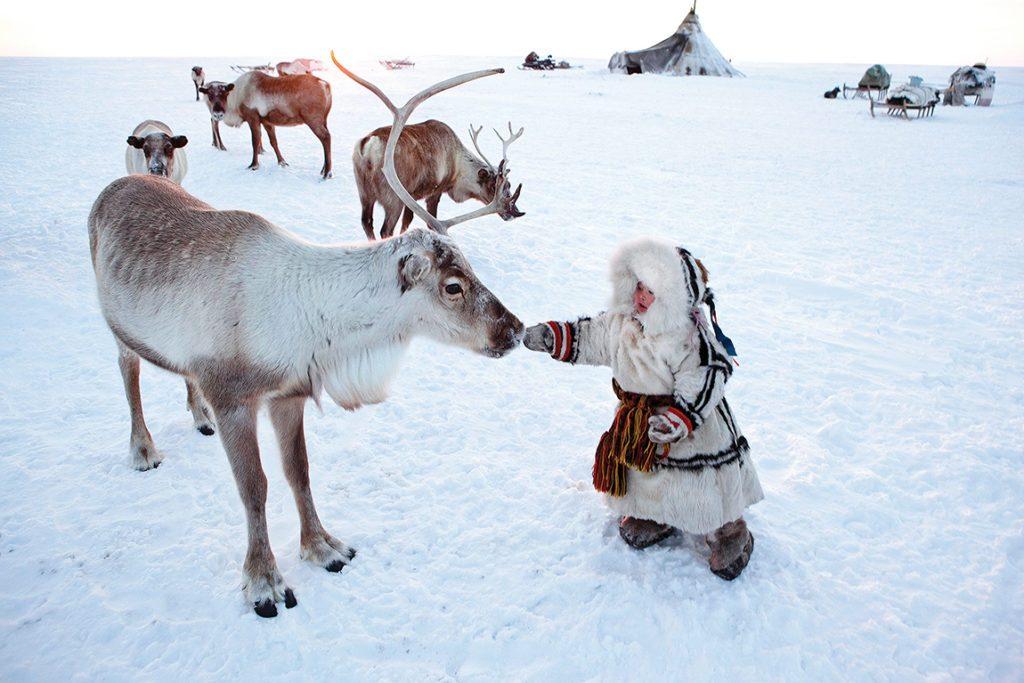 Les Renne Du Pere Noel.Rennes Du Père Noël à La Rencontre Du Véritable Rudolph