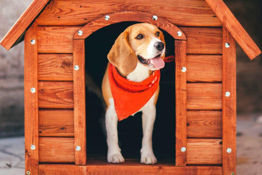 Votre animal de compagnie possède un véritable château en guise de niche.