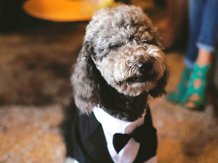 Votre animal de compagnie a le droit à sa garde-robe personnelle.