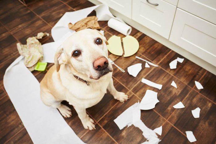 Votre animal de compagnie est peut-être trop aimé si vous le laissez faire des bêtises.