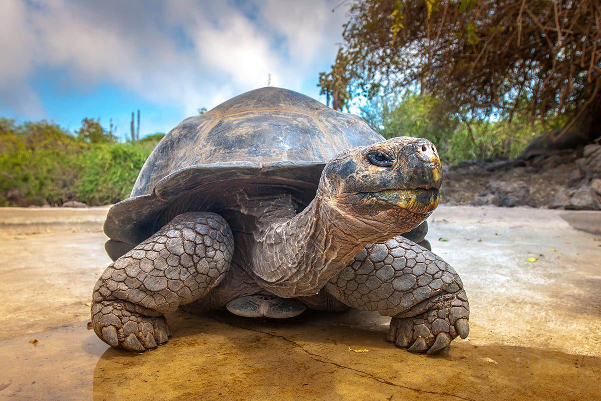 Animaux familiers : la plus vieille tortue géante au monde a plus de 175 ans.