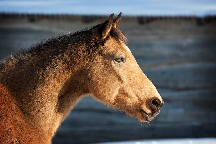 Animaux familiers : le plus vieux cheval en monde a vécu en Angleterre.