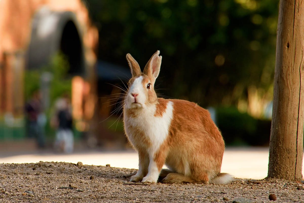 Animaux familiers : le plus vieux lapin au monde a vécu 16 ans.