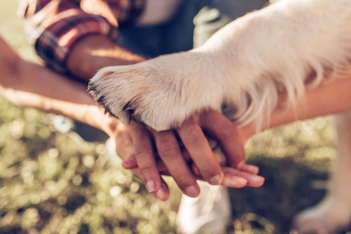 Chien et chat : renseignez-vous auprès d'un vétérinaire avant d'adopter un chat.