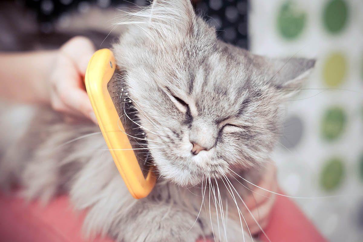 Pour le chien et le chat, choisissez une brosse adaptée.
