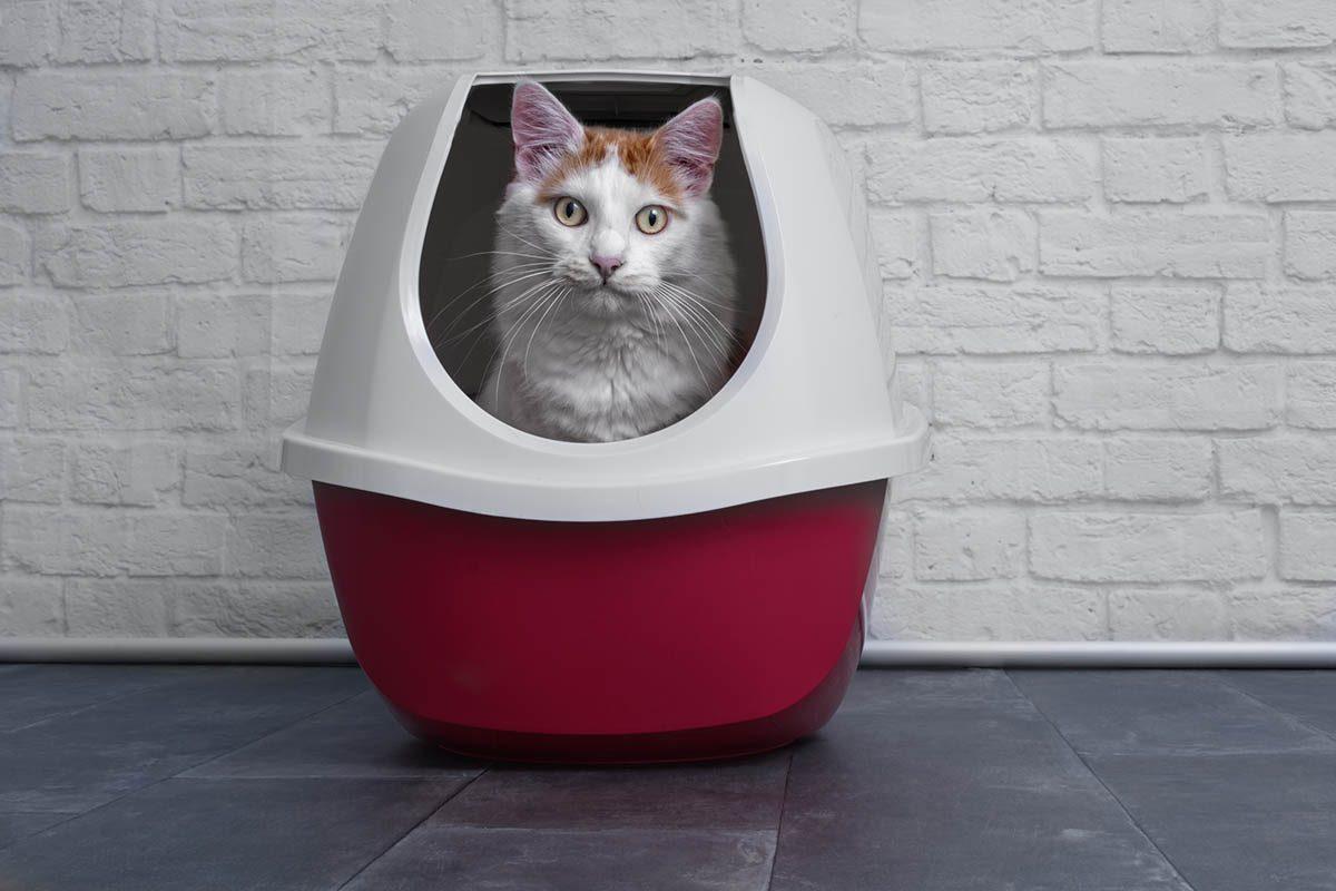 Chien et chat : votre chat n'aime par se sentir coincé dans la litière.