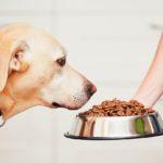 Mon chien m'aime-t-il plus que son repas?