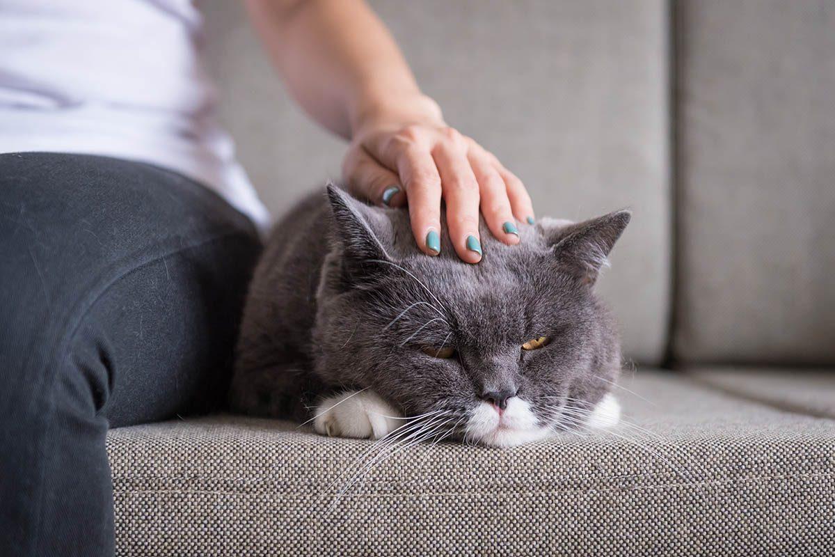 Chien et chat : n'insistez pas s'il se raidis lorsque vous lui caressez le dos.