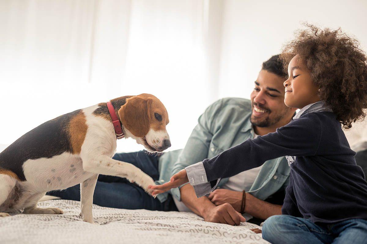 Le chien et le chat doivent rencontrer beaucoup de gens à leur bas âge pour socialiser.