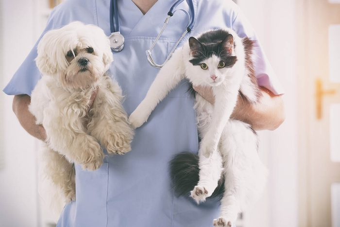 Chien et chat : amenez-le voir un vétérinaire s'il adopte des comportements étranges.