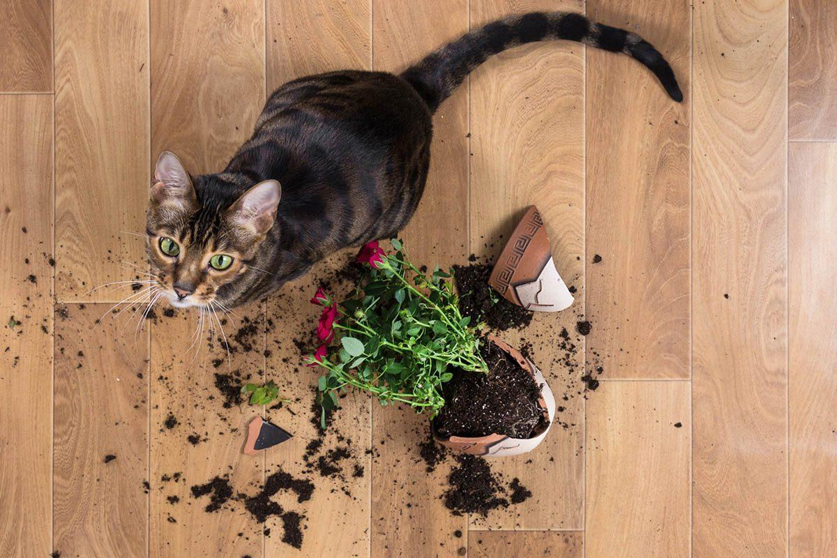 Chien et chat n'ont pas la même vision des choses que vous.