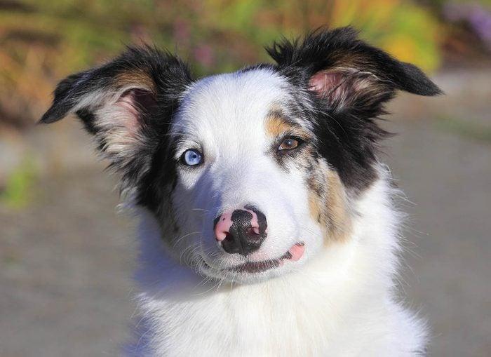 Expressions faciales chez le chien : cligner des yeux est un signe d'apaisement.