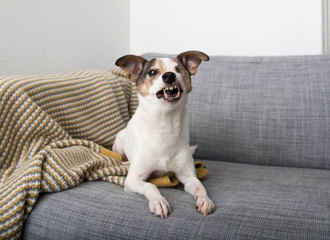 Expressions faciales chez le chien : il peut faire des grimaces lorsqu'il a peur.