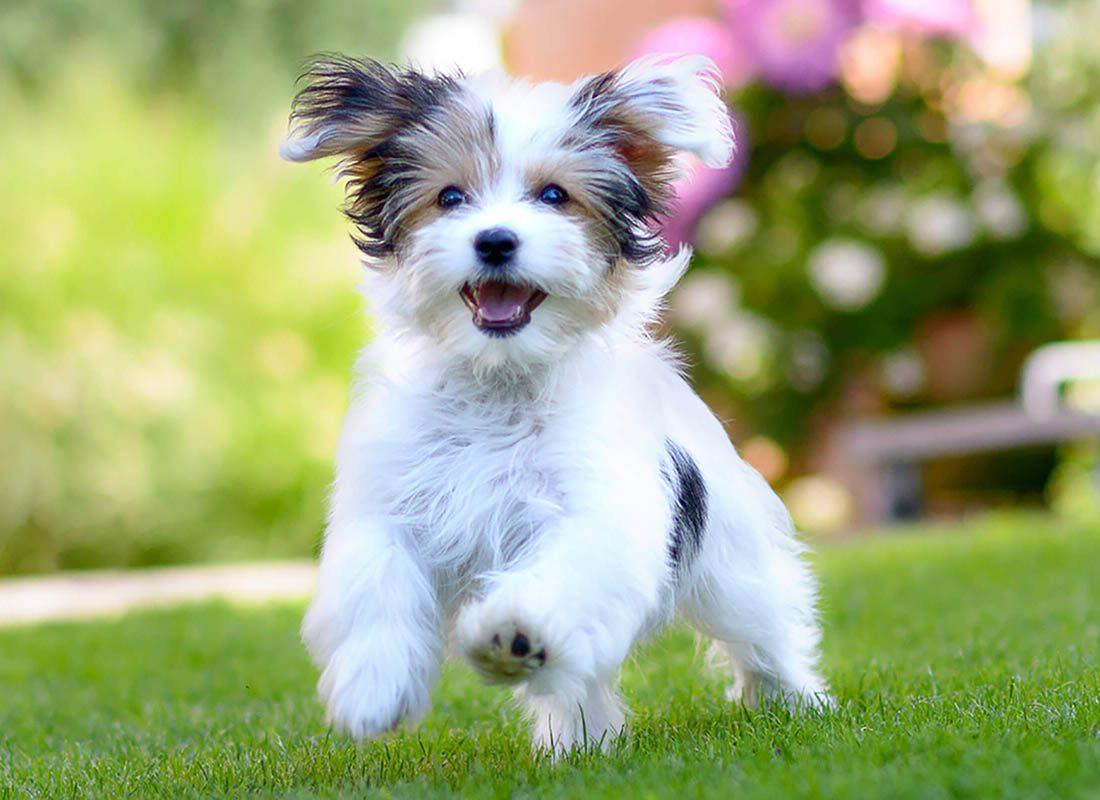 Expressions faciales chez le chien : en cas de doute, fiez-vous à son langage corporel.