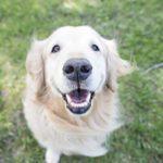 Décodez les expressions faciales chez le chien