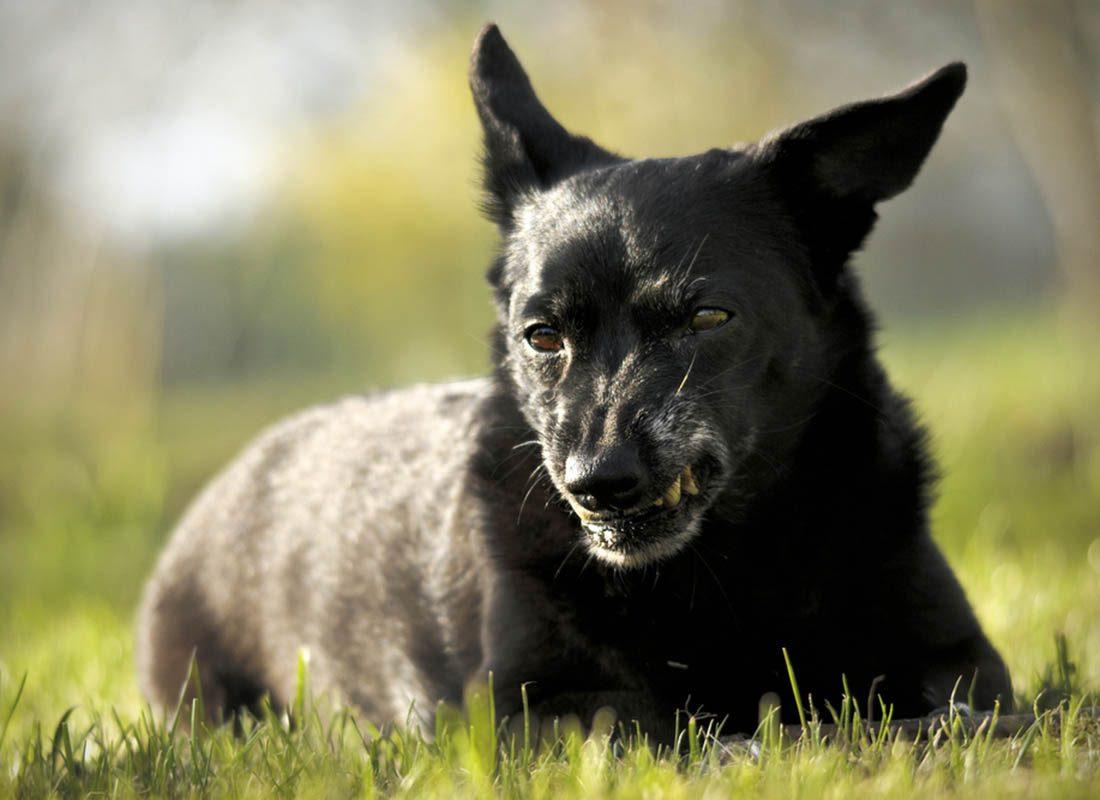Expressions faciales chez le chien : si son nez se ride, il est fâché.
