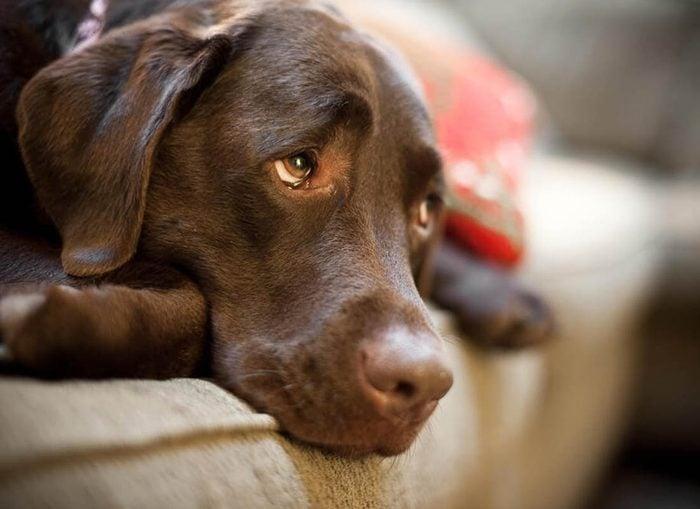 Expressions faciales chez le chien : la tête baissée est un signe de soumission.