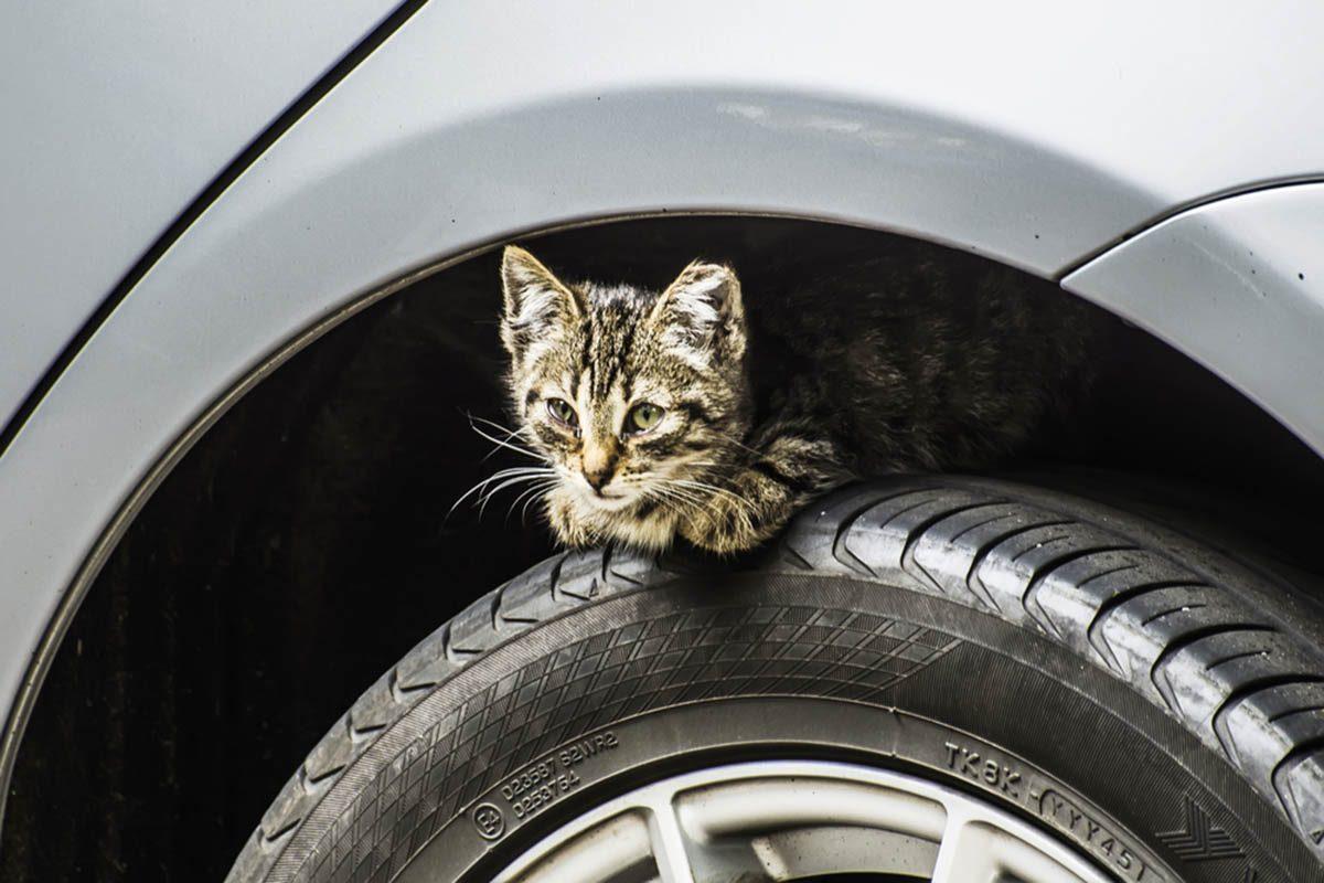 Dans un garage, un mécanicien retrouve un chaton dans le moteur.