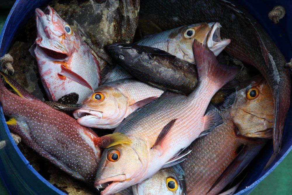 Dans un garage, un mécanicien retrouve une grosse pile de têtes de poissons.