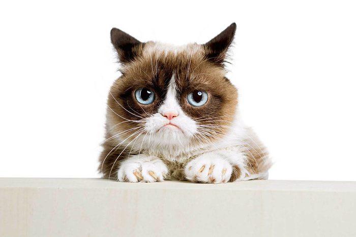 Pardonner est impossible pour un chat.