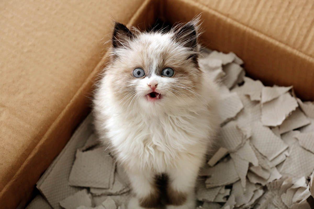 Procrastination : regardez plutôt des vidéos de chats.