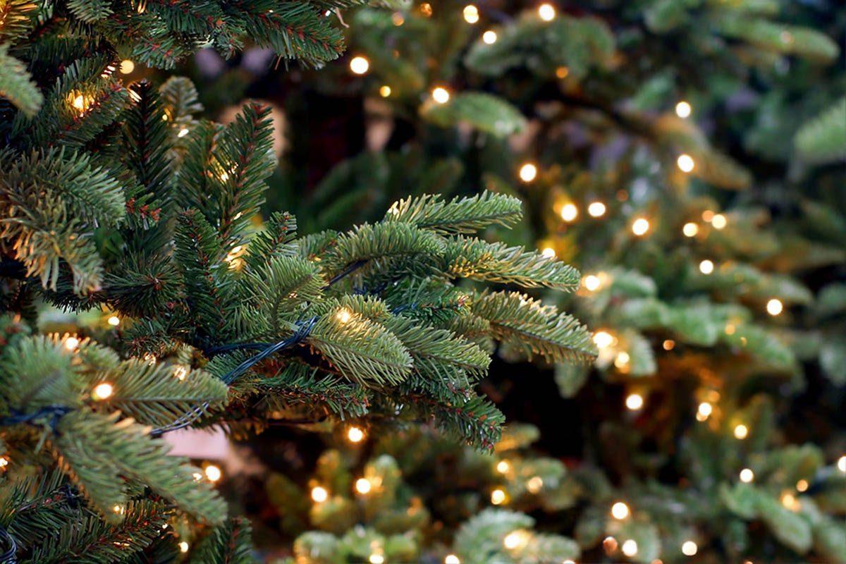 Durant le temps des Fêtes a lieu la plus grande exposition d'arbres de Noël illuminés.