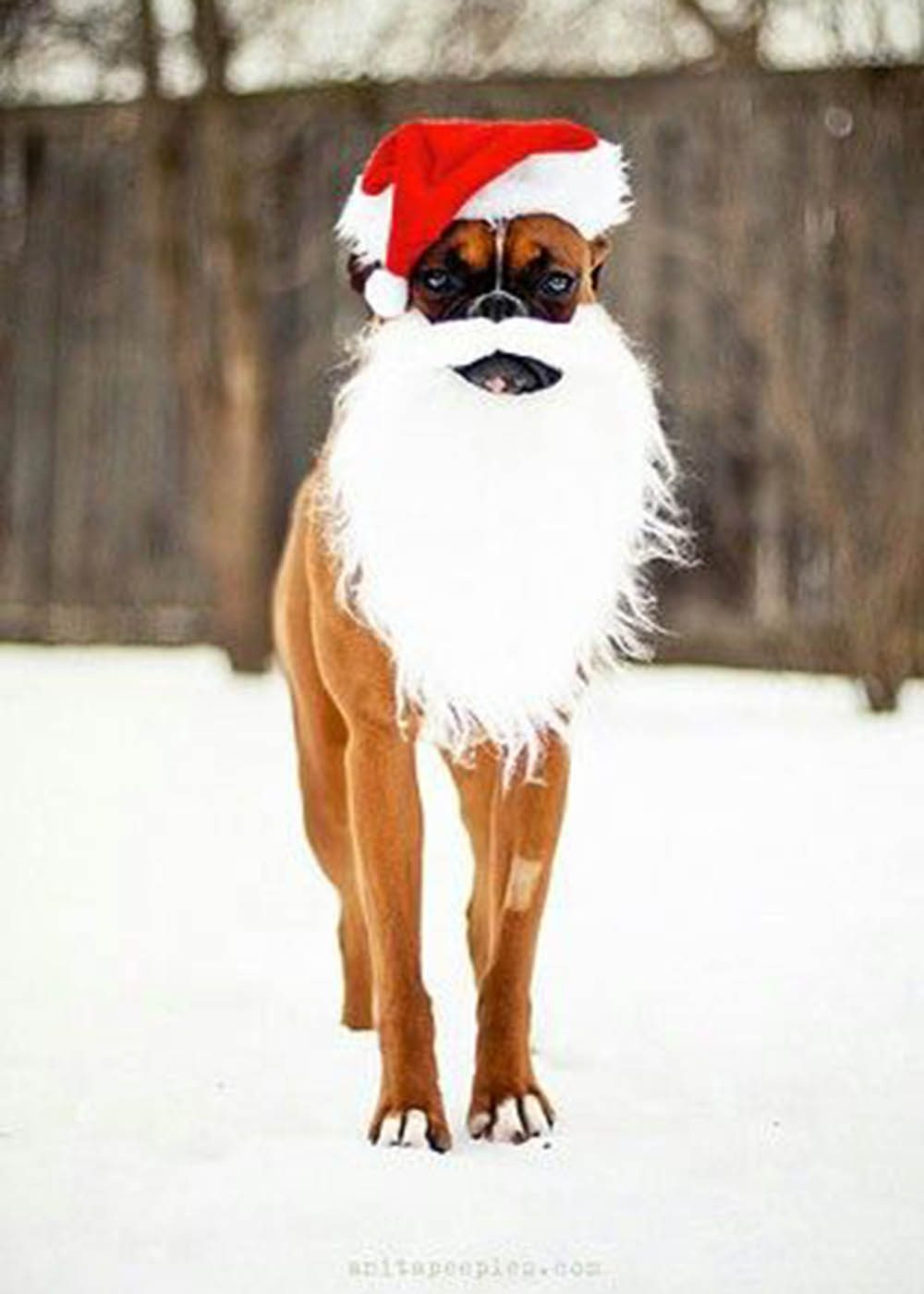 Chiens Noël : Ho! Ho! Wouf!