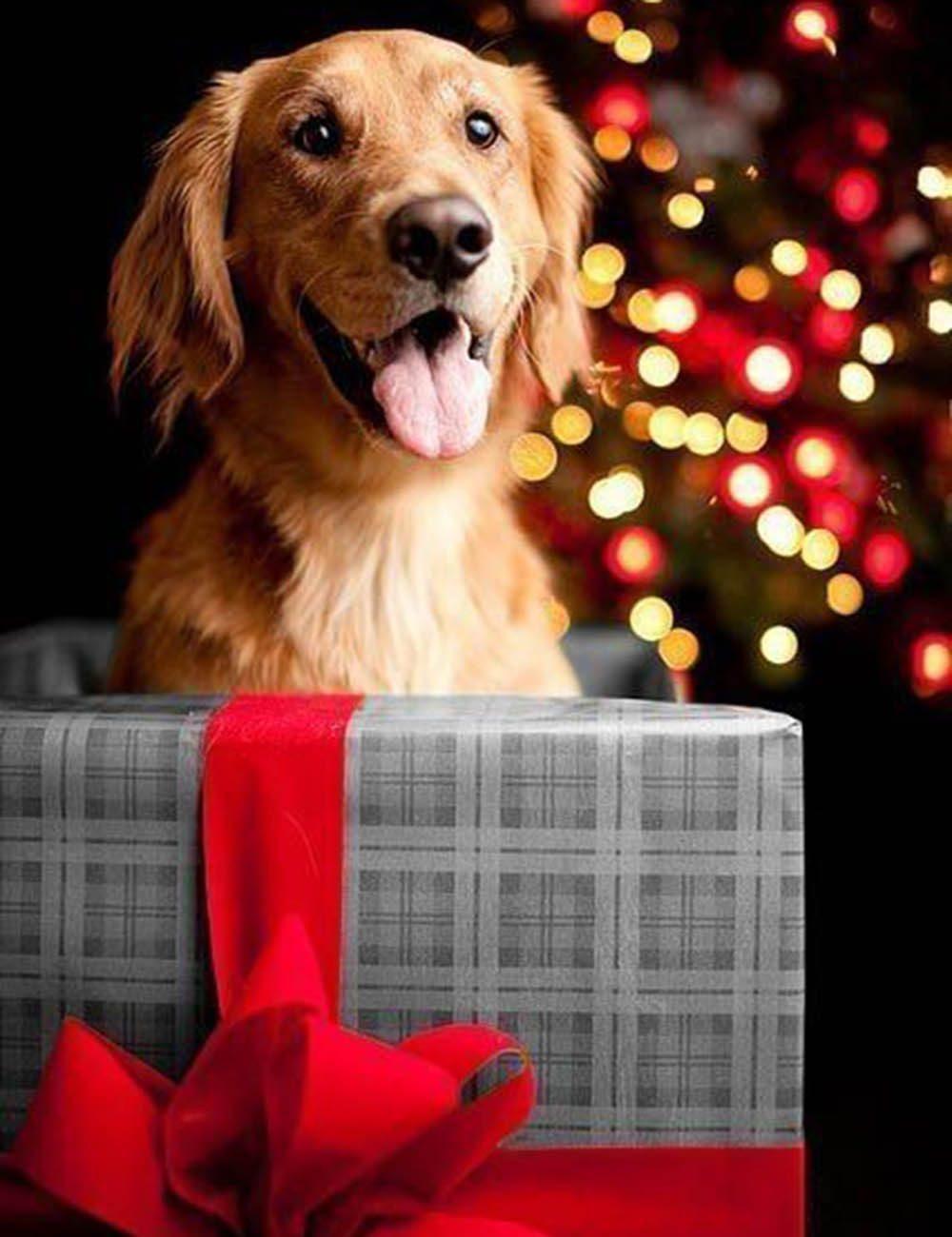 Chiens Noël : surprise! Je suis là! C'est moi ton plus beau cadeau!