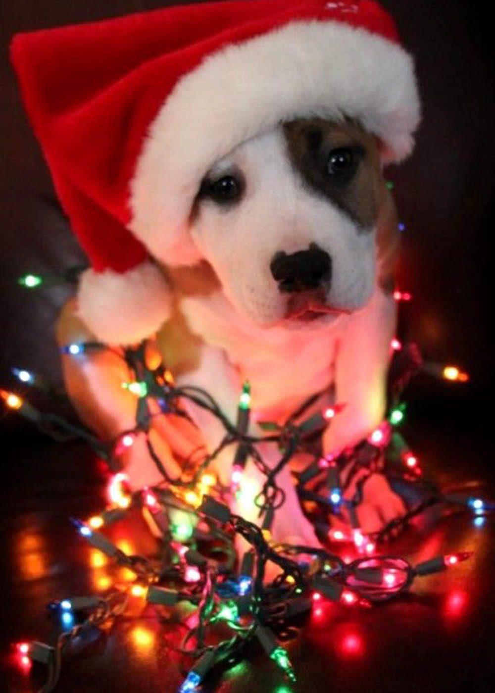 Chiens Noël : je veux décorer mon coussin! Dis ouiiiiii!