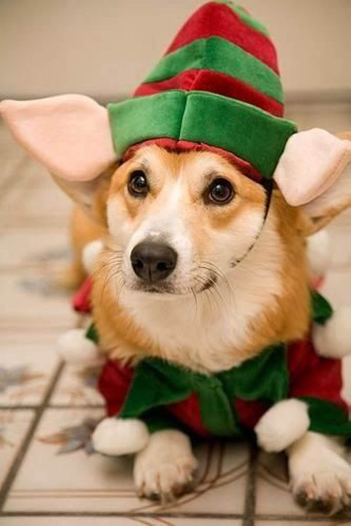 Chiens Noël : on m'a dit qu'il manquait un lutin dans l'atelier du père Noël!