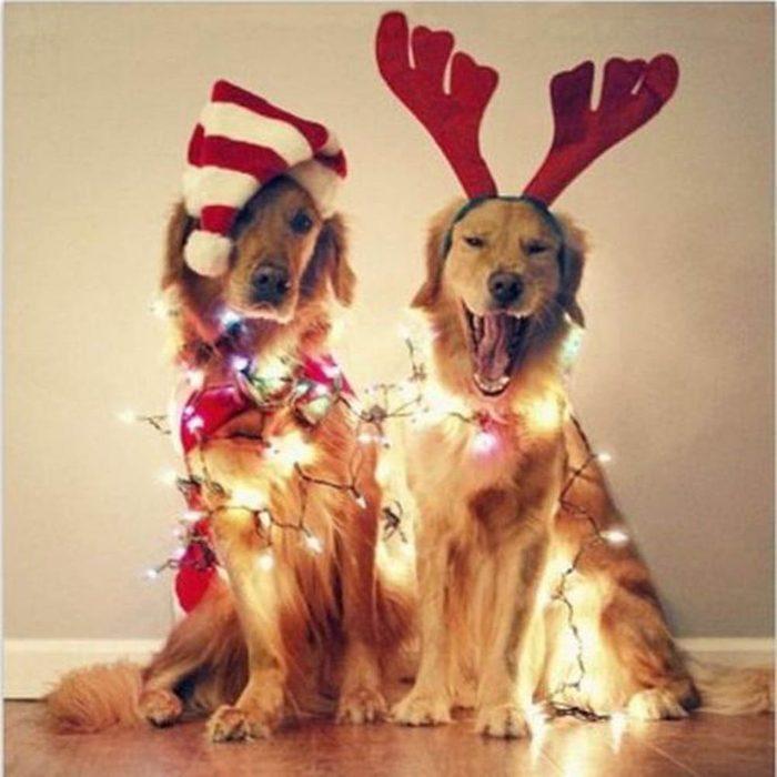 Chiens Noël : qui a été sage? Qui a été tannant?