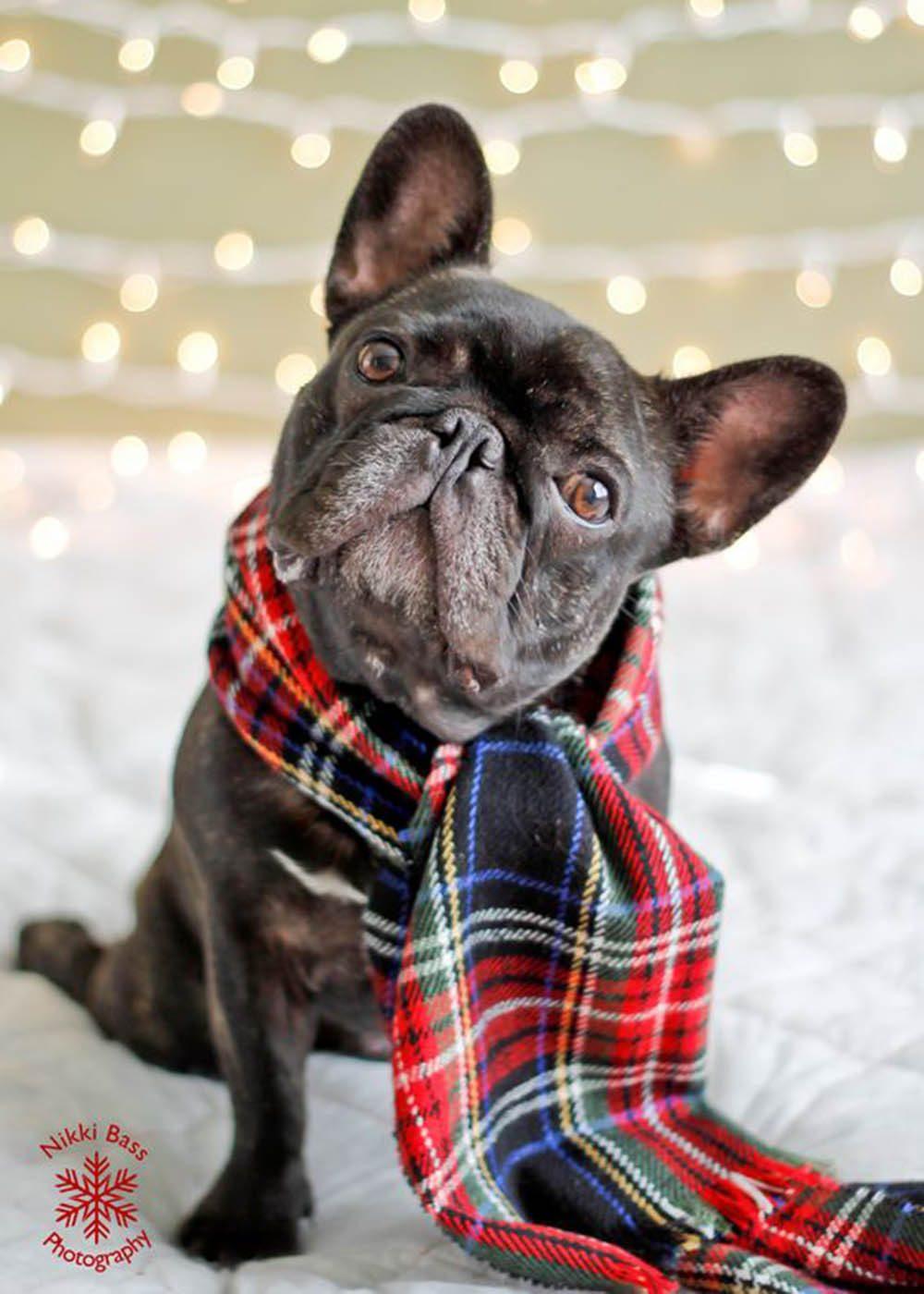 Chiens Noël : c'est la plus belle saison de l'année!