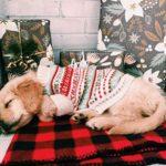 25 chiens prêts pour Noël