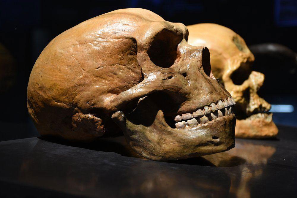 Selon les découvertes scientifiques de l'année, Néandertaliens et Denisoviens se seraient métissés.