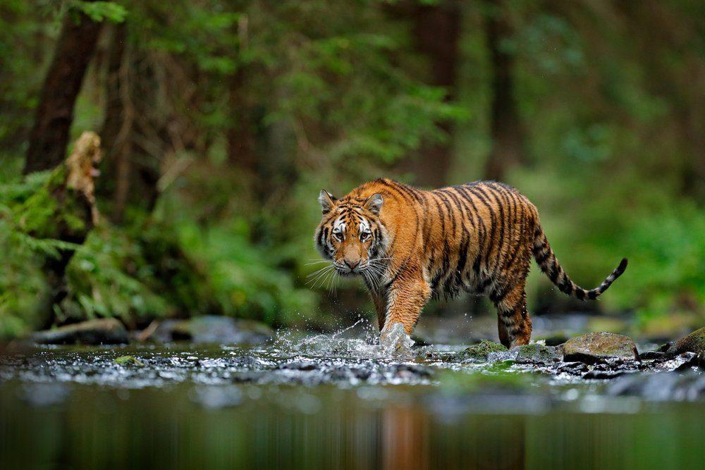 L'une des découvertes scientifiques de l'année dénonce le fait que les populations animales diminuent de manière spectaculaire.