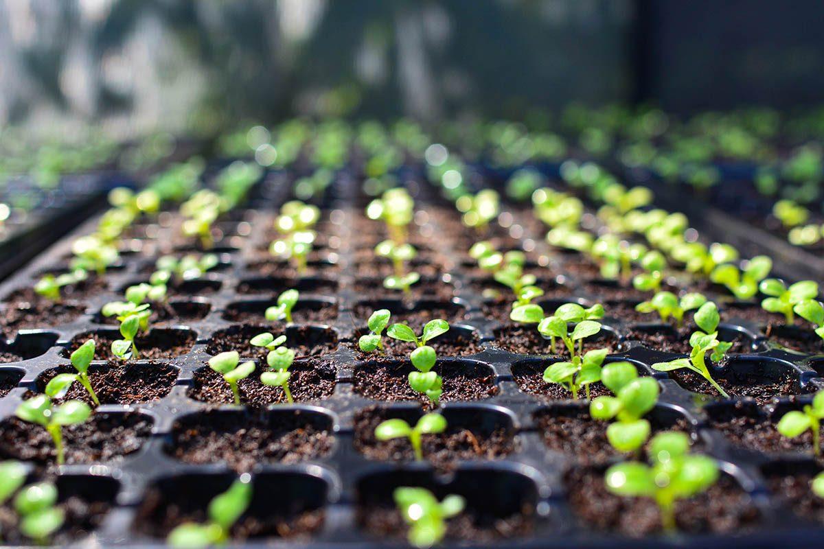 Résolution écologique à adopter : faire son propre potager.