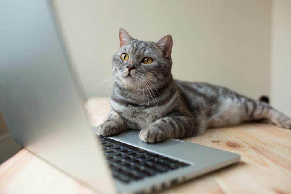 Pour avoir de l'énergie, regardez des vidéos de chats.
